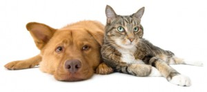 Dog and cat leaning on each other. ManagingBack to School Anxiety For Pets
