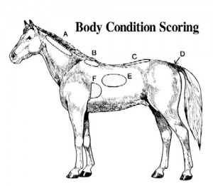 Body Condition Scoring Chart for Horses