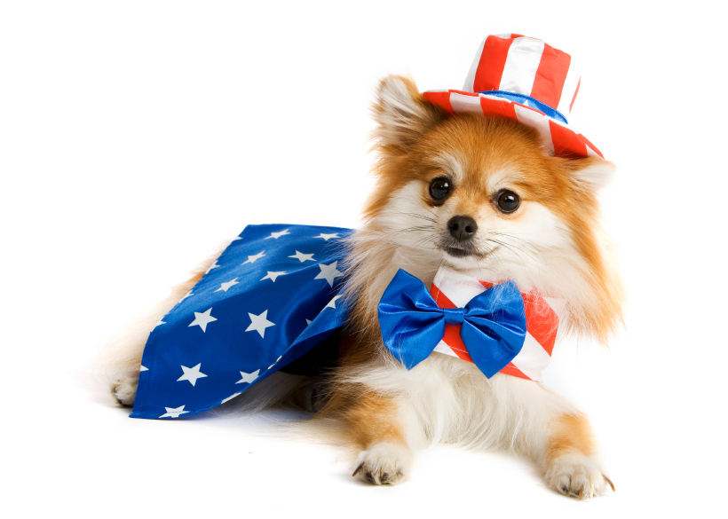 July 4th Pet Safety Tips