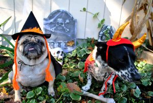 Pet Halloween Safety
