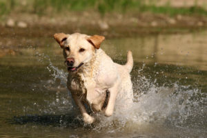 Outdoor Activities With Your Dog