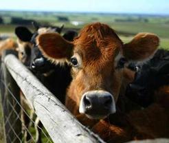 Animal Feed Price