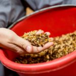 Purina horse feed; feeding guidelines for horses