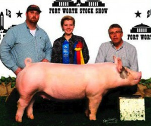 Show Clinic Pig picture with show feeds