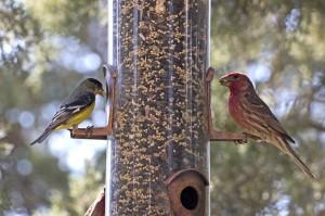Wild Bird Feeder Feeding Wild Birds