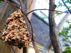 christmas tree recycling as a bird feeder