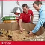Raising 6 Week Old Chicks