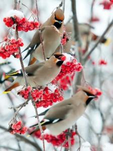 2021 Great Backyard Bird Count