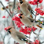wild birds in tree