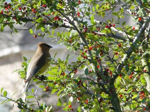 Wild Bird in tree