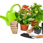Garden Planting; garden plants, flowers, and supplies