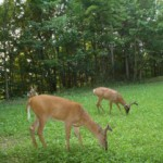 Food Plot Seed Blends At Farmers Coop