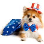 Uncle Sam Pup, Fourth of July Pet Safety Tips