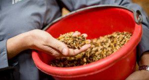 hand holding Horse Feed Nutrition in a bucket