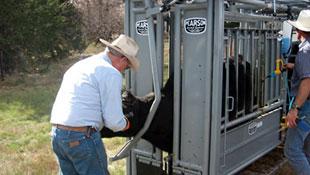 pearson livestock equipment