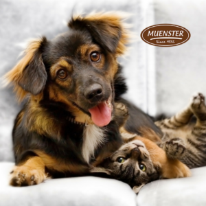 Muenster dog food logo on top of picture of a dog and cat