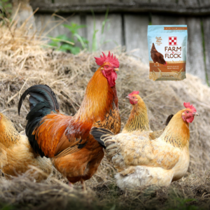chicken treats at Farmers Coop.