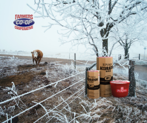 Read our Cattle mineral tips for winter and find out how can you prevent nutrient deficiencies in winter's cool temperatures.
