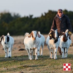 Sheep and Goat Webinar at Farmers Coop on May 12, 2020.