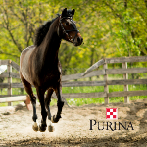 Purina Equine Series with Farmers Co-op.