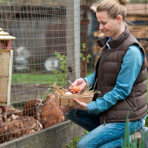 Fall Chick Tip: Transitioning Your Flock to Fall with the help of Farmer's Coop in Van Buren, AR