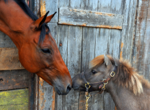 Large and small horse at barn door.