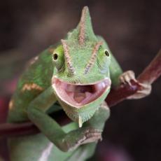 Exotic Green Reptile.