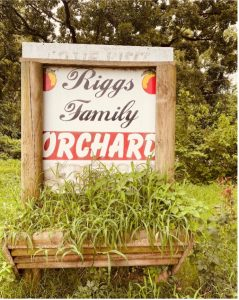 The first thing you notice when you pull up to Riggs Family Orchard in Spiro, Oklahoma is the smell. The air smells sweet peaches.